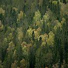 Skuleskogen Treescape by George Wheelhouse
