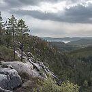 Skuleskogen Forest by George Wheelhouse
