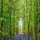 Bluebell Cathedral by George Wheelhouse