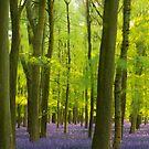 Bluebell Wood Blur by George Wheelhouse