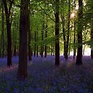 Bluebell Wood (Afternoon Sun) by George Wheelhouse