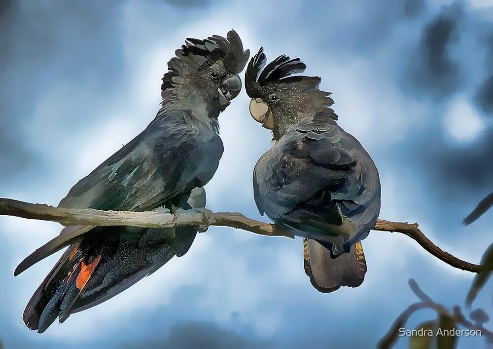 Black Cockatoos Art by Sandra Anderson