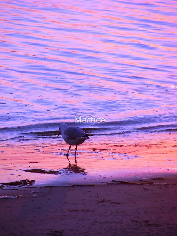 Purple-Orange Seagull Sunset by Martice