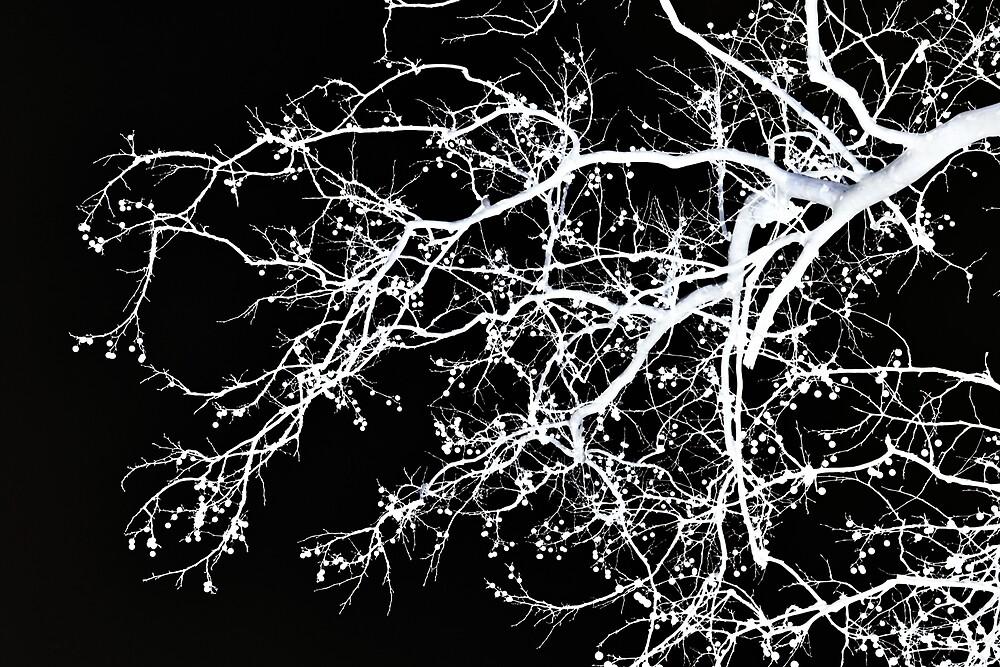 Winter Tree No. 69-2 by SandyTaylorNYC