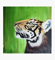 Tiger, acrylic paint on canvas Photographic Print