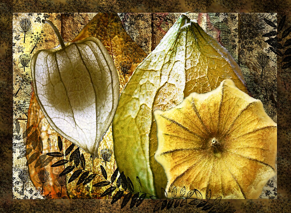 Cape Gooseberry collage by Sabine Spiesser