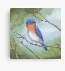 Bluebird on Branch Canvas Print