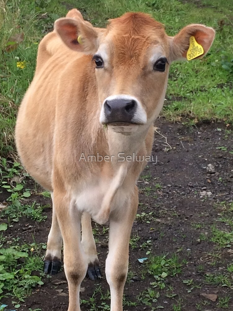 Jersey cow by Amber Selway
