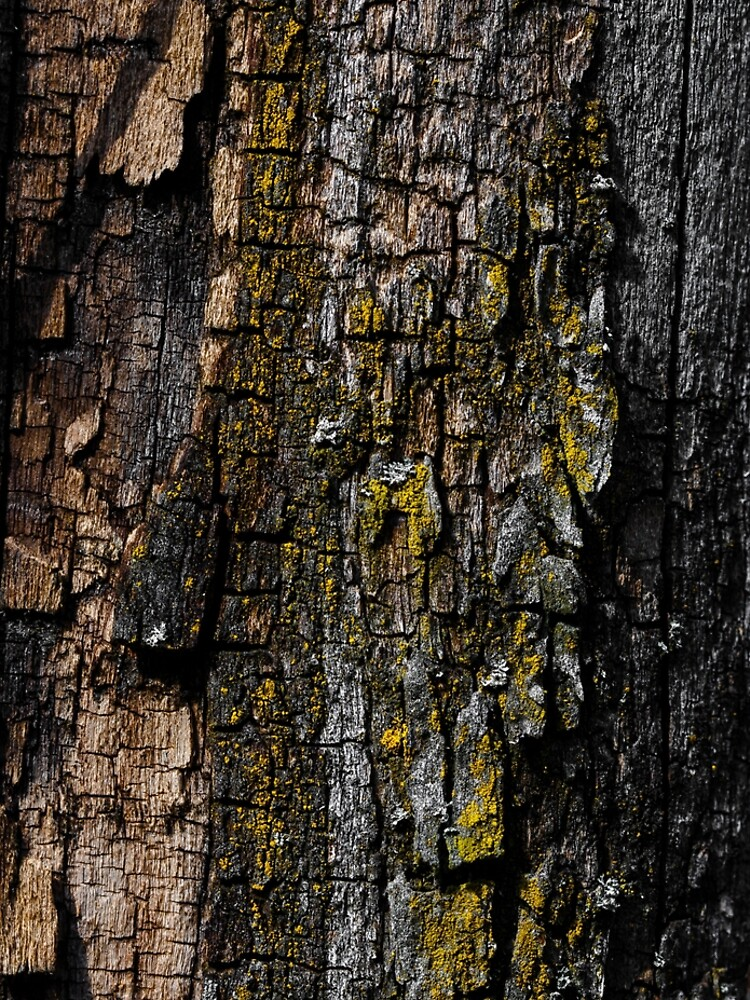Cool Brown wood bark with yellow lichen pattern by PLdesign