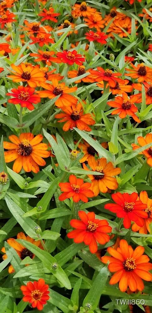 Beautiful Flowers by TWill860