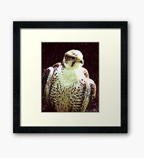 Hobby - Bird of Prey Framed Print