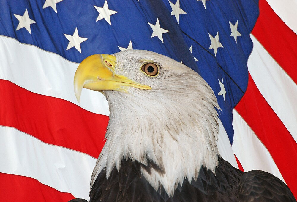 BALD EAGLE AND AMERICAN FLAG by pjwuebker