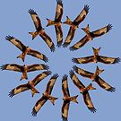 Red kite circles by BeardyGit