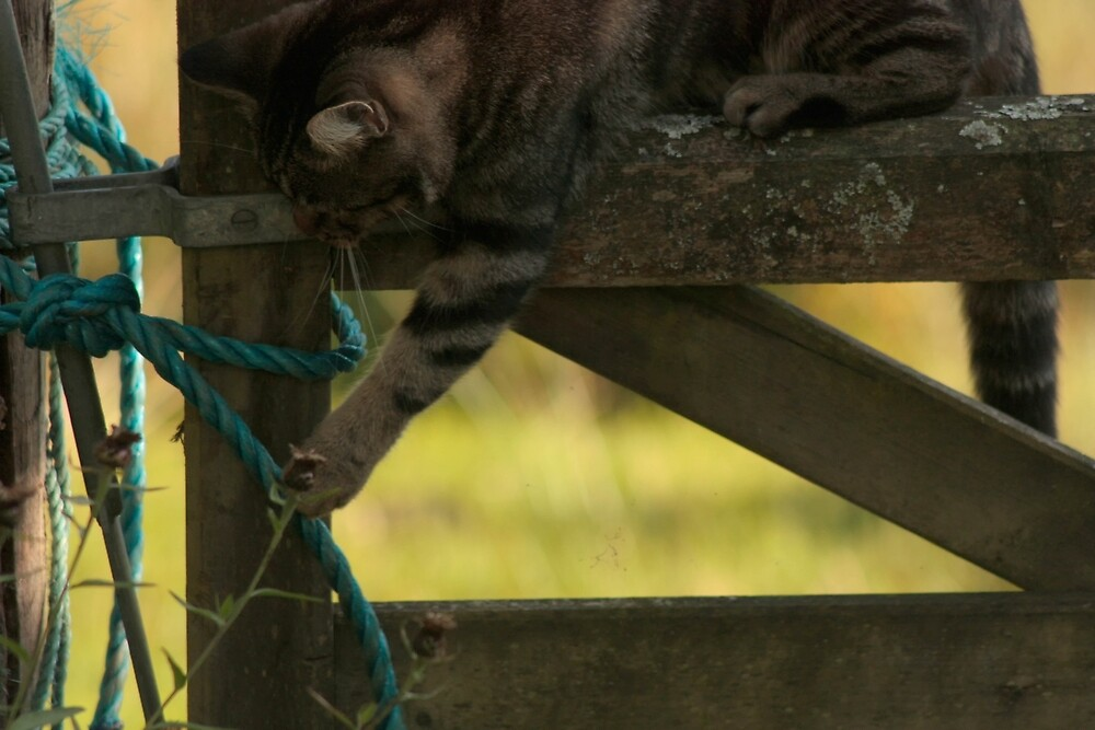 Tabby cat on a fence (Poppy) by franceslewis