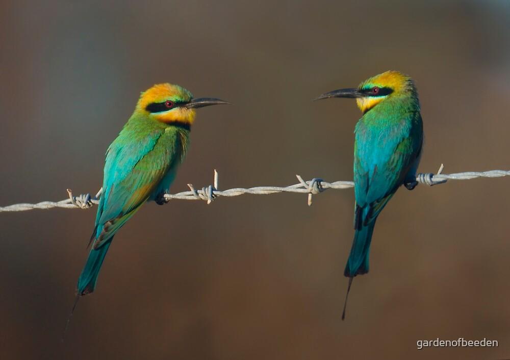 Birds on a wire by gardenofbeeden
