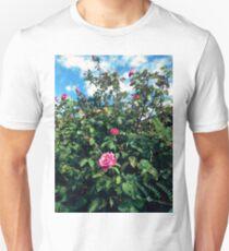 paradise rosebush 09/08/17 T-Shirt