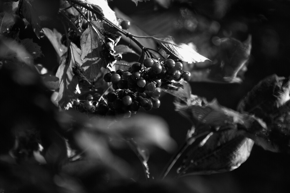 Wild berries by franceslewis