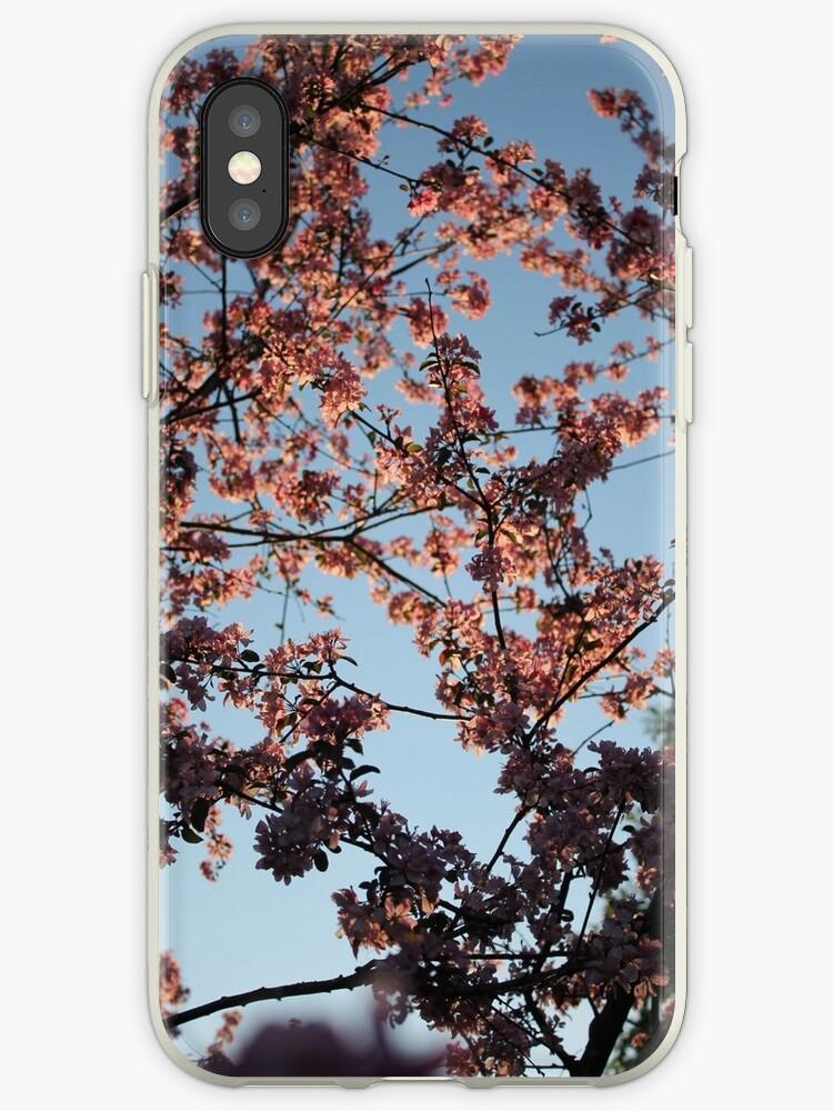 Cherry Blossoms in Sunset's Light by veepukkamehu
