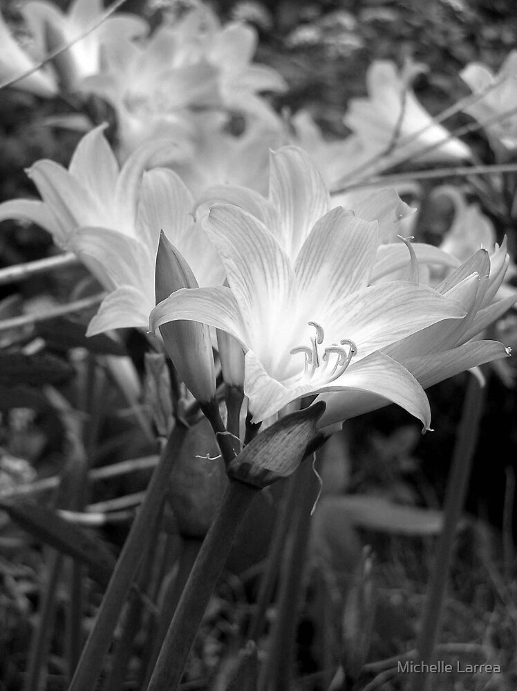 Lilies by Michelle Larrea