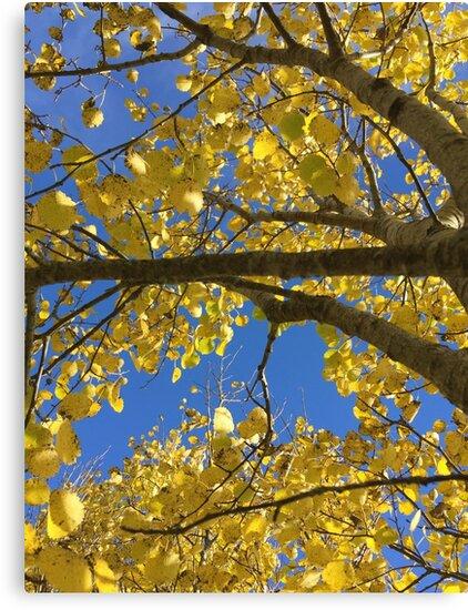 Autumn Birch by BigD13