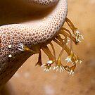 Osprey Reef - Emerging Polyp by Douglas Stetner