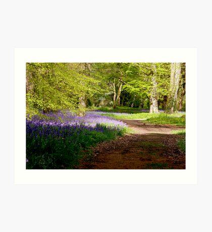 A Walk in Bluebell Wood- Thorpe Perrow (Spring) Art Print