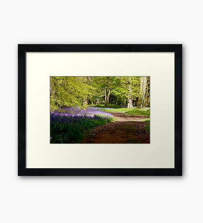 A Walk in Bluebell Wood- Thorpe Perrow (Spring) Framed Print