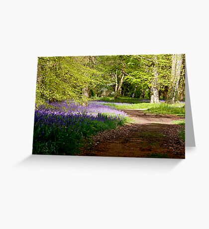 A Walk in Bluebell Wood- Thorpe Perrow (Spring) Greeting Card