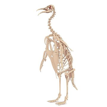 Emperor Penguin Skeleton by IVL3D