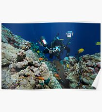 Osprey Reef - Underwater Photographer Poster