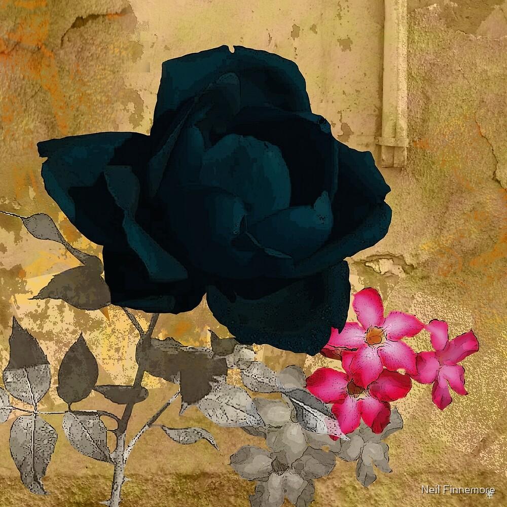 BLACK ROSE by FieryFinn77