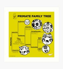 Primate Family Tree Art Print
