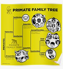 Primate Family Tree Poster