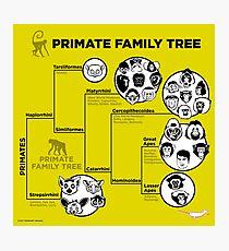 Primate Family Tree Photographic Print