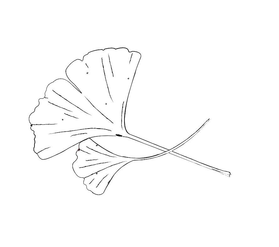 Ginkgo Leaf Design by rosejohnston