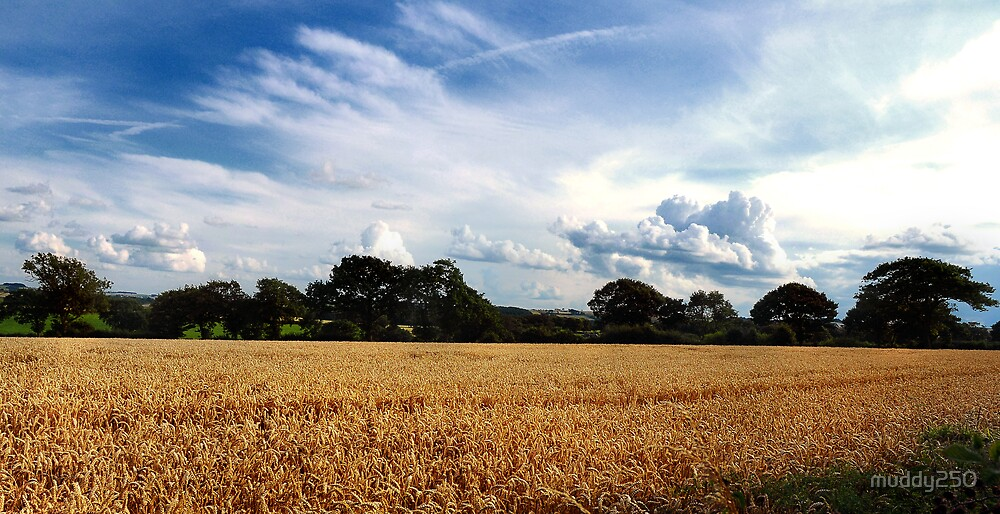 Just before the harvest by Chris Charlesworth
