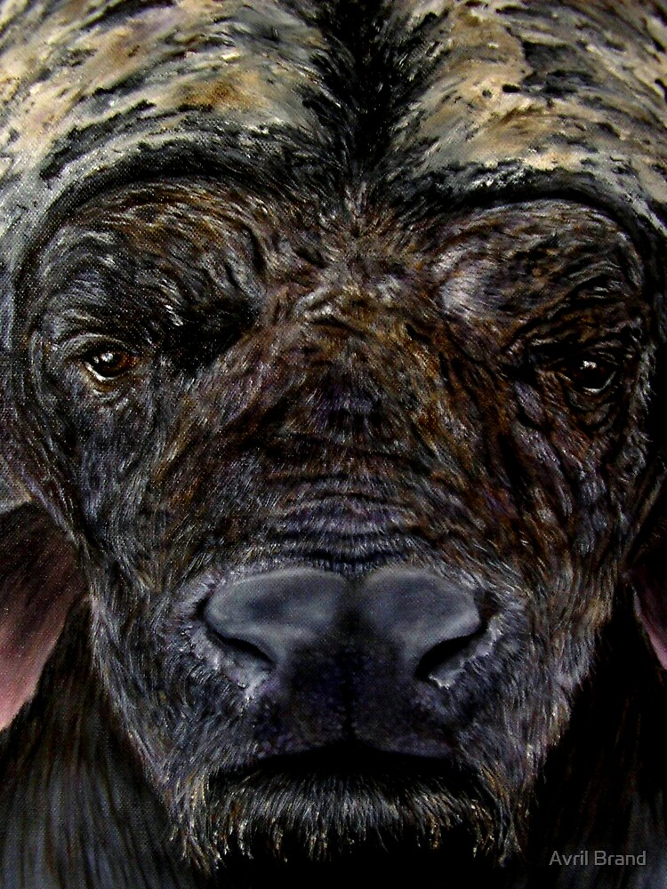 """Face a Cape Buffalo"" - Oil Painting by Avril Brand"