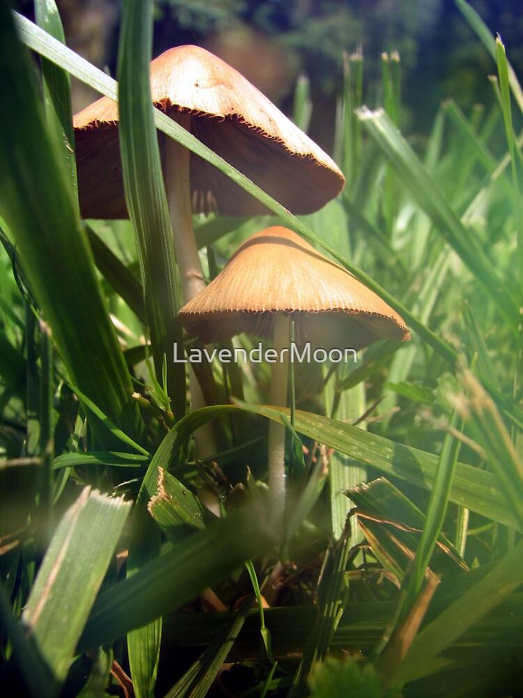 Sun Hats  by LavenderMoon