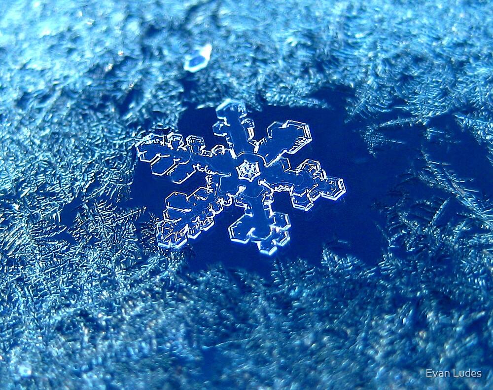 Hoar Frost by Evan Ludes