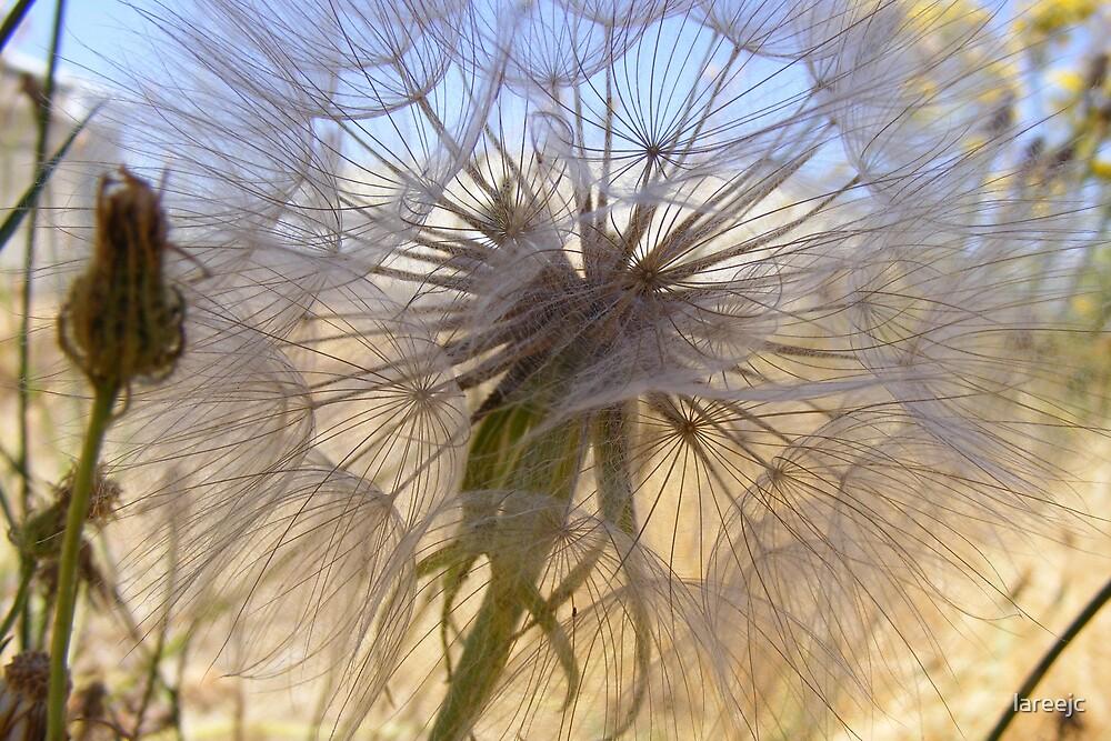 Dandy Web by lareejc