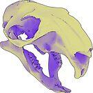 Muskrat skull by IVL3D