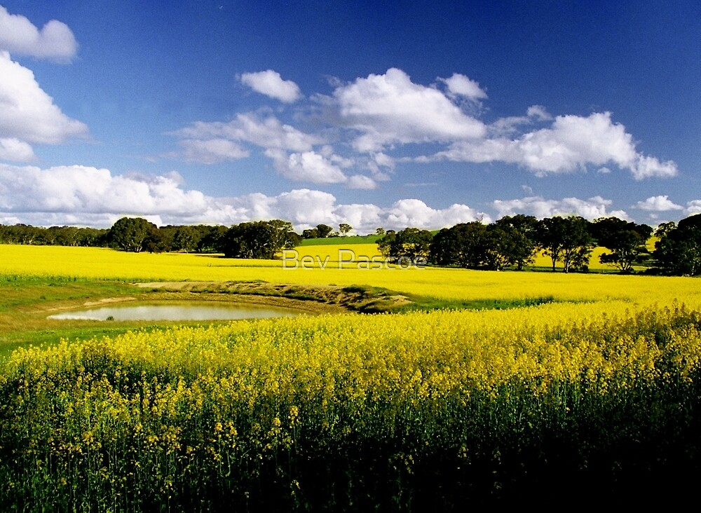 Fields of Canola, Cathcart, Victoria by Bev Pascoe