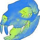 Rock hyrax skull by IVL3D
