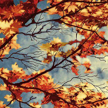 Autumn sky by RM-Wilde