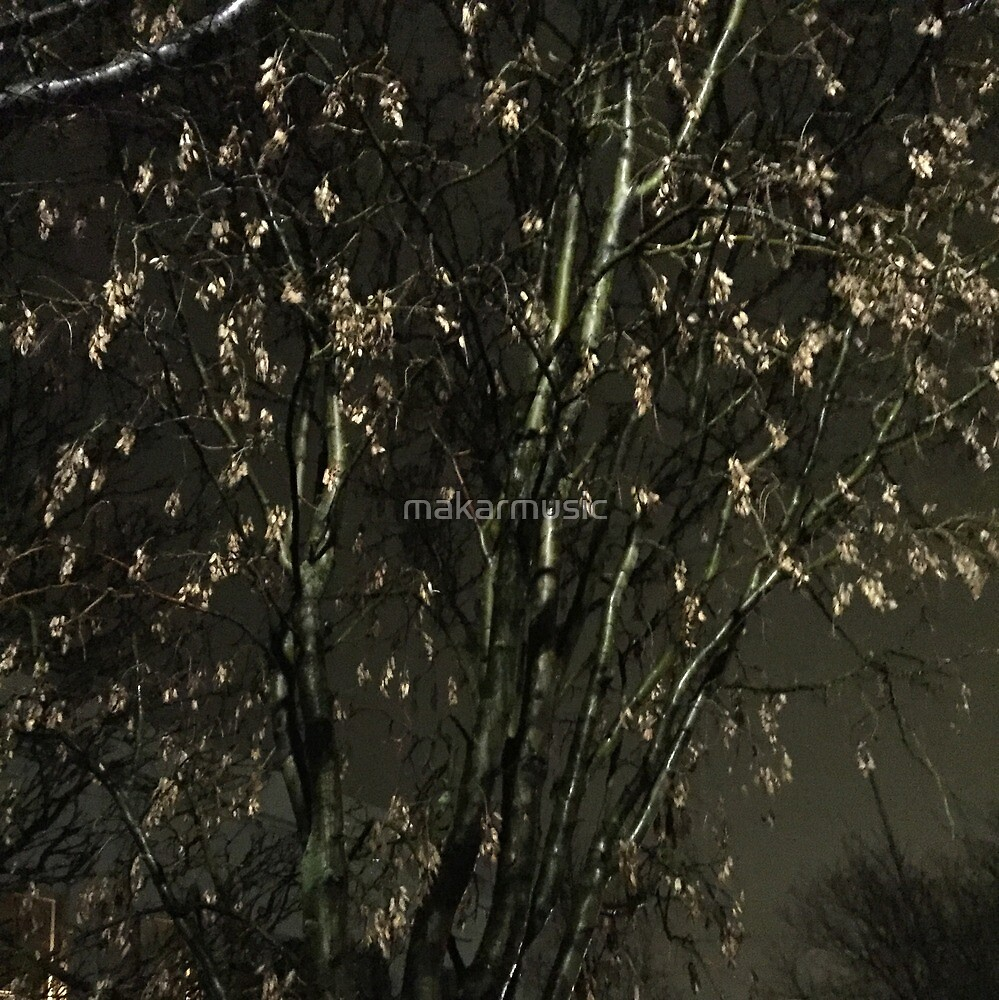 Iceland Tree at night by makarmusic