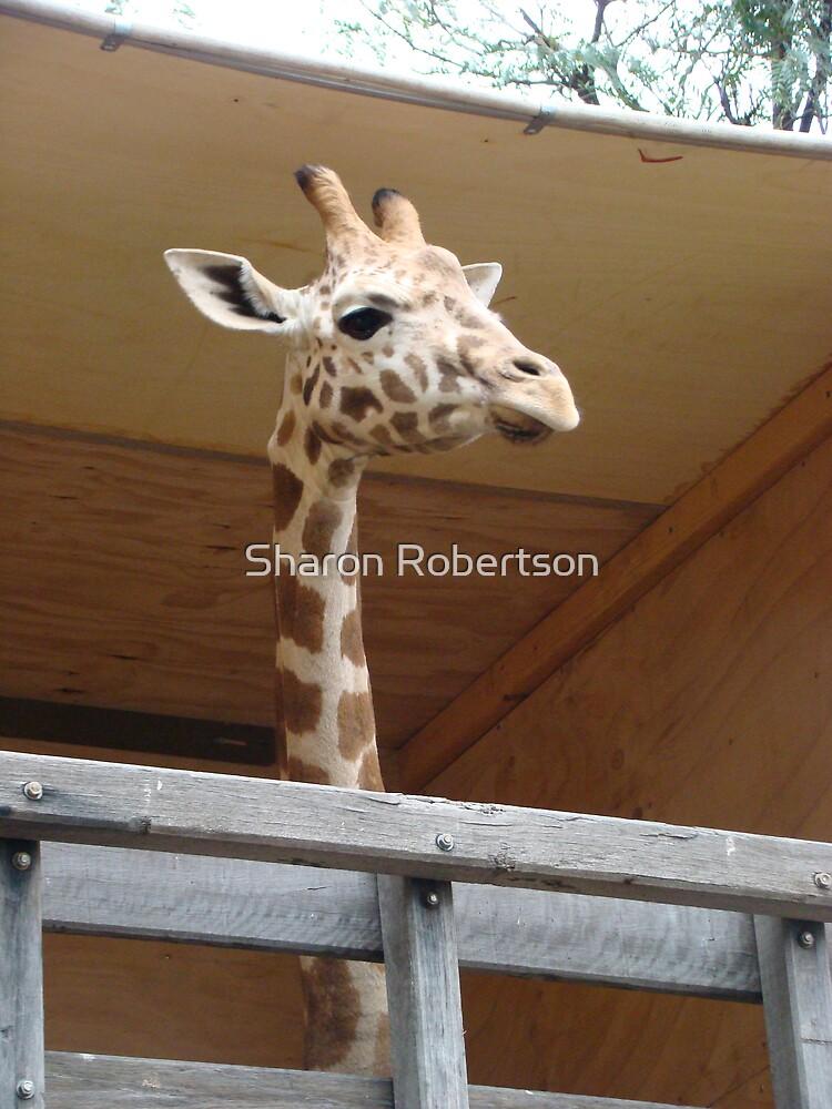 New Baby Giraffe at Taronga Zoo by Sharon Robertson