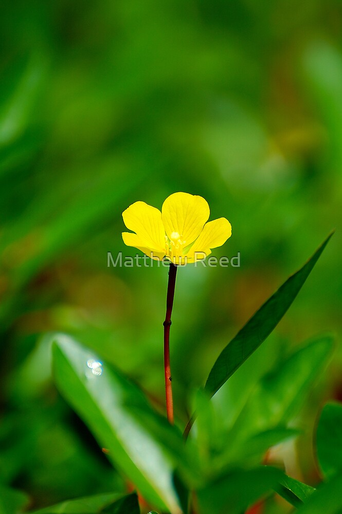 Natures simplistic beauty, strength, perseverance. by Matthew Reed