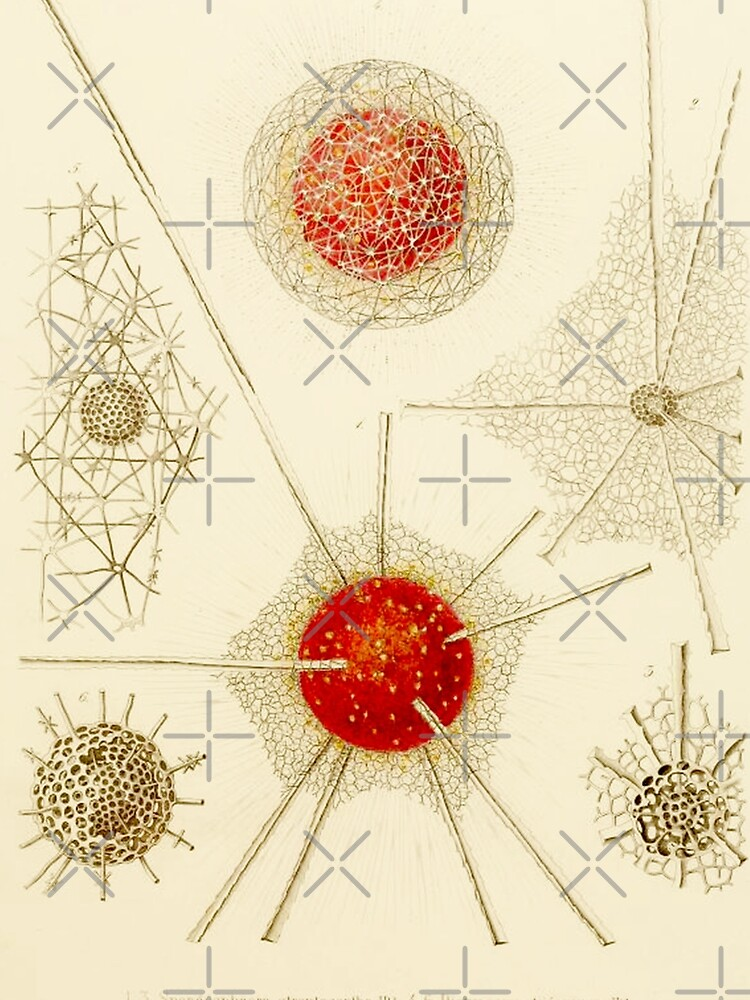 HD Radiolaria (1862) by Ernst Haeckels  (2 of 5 designs) by mindthecherry