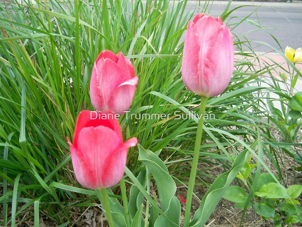 3 pink tulips ~FRANNY'S Garden by Diane Trummer Sullivan