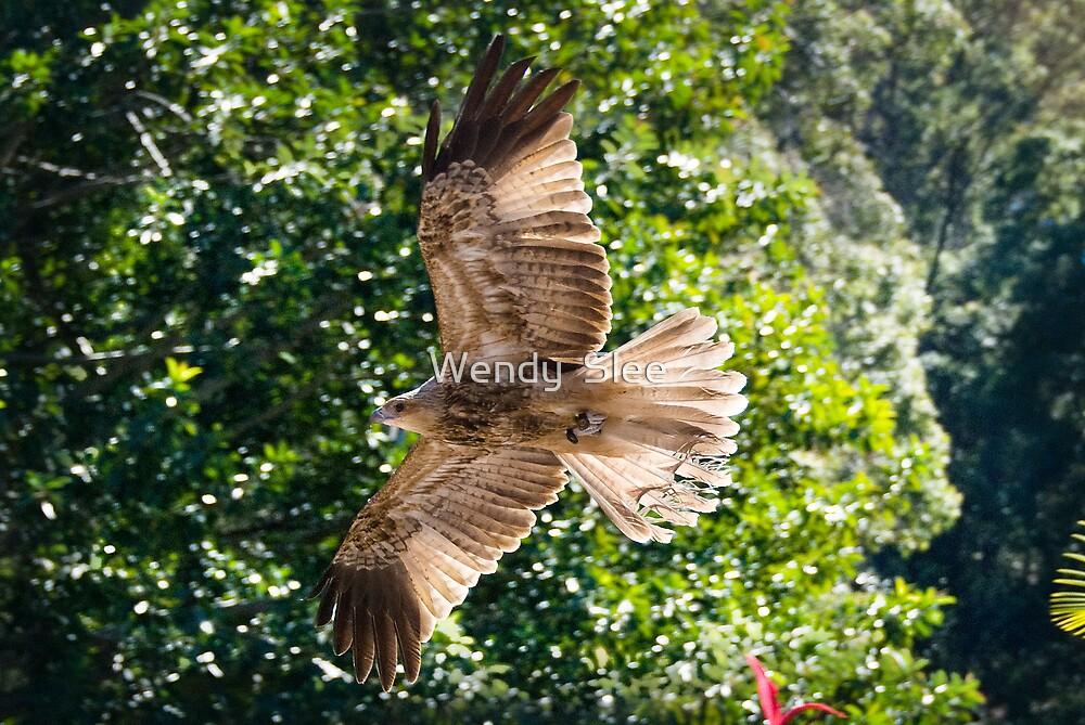 Wings of Light by Wendy  Slee